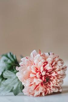 Chrysant pip zalm op een witte tafel