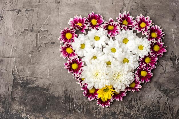 Chrysanthemum in de vorm van hart met kopie ruimte op een donkere achtergrond