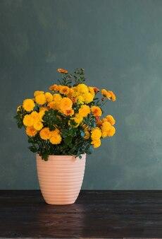 Chrysanthemum in pot op oppervlakte groene muur