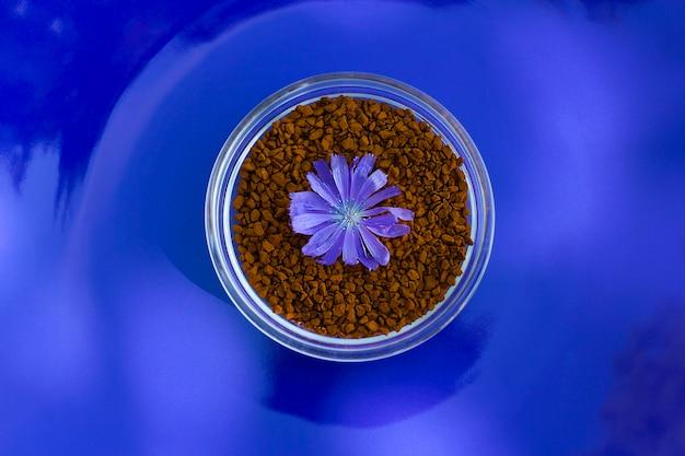 Cichorei korrels met cichorei bloem voor cafeïnevrije gezonde drank op blauwe tafel