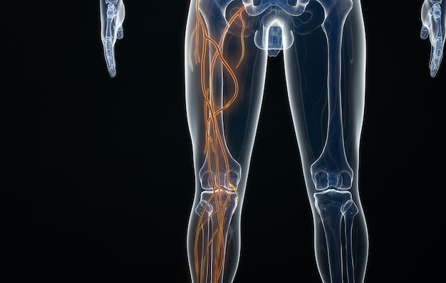 Cinema 4d-weergave van de arteriële structuur van het menselijk been Premium Foto