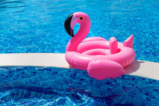 Cirkel van flamingo's in het zwembad. selectieve aandacht. water.