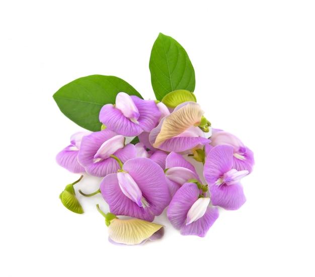 Clitoria ternatea of aparajita-bloem op wit wordt geïsoleerd dat