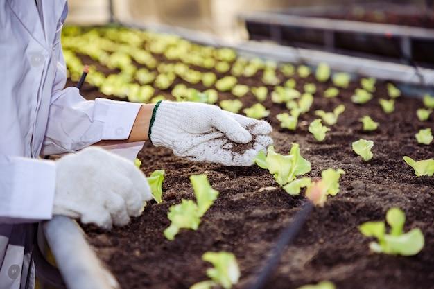 Close-up, aziatische biotechnoloog controleert en past groene eikengroente in biologische boerderij aan voor onderzoekssoorten.