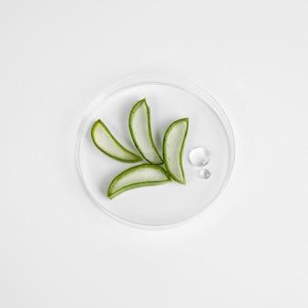 Close-up beeld van aloë vera schoonheid concept