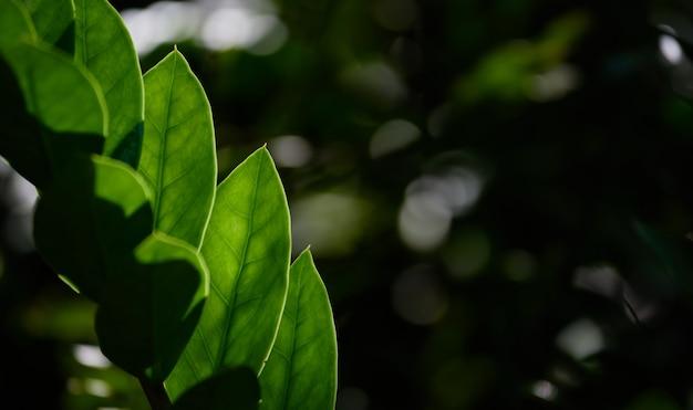 Close-up beeld van de groene bladeren in het regenwoud