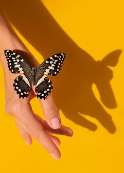 Close-up beeld van prachtige vlinder bij de hand