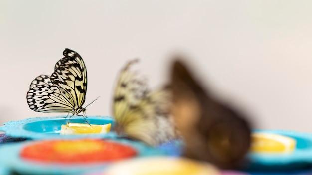 Close-up beeld van prachtige vlinder concept