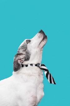 Close-up beeld van schattige hond concept