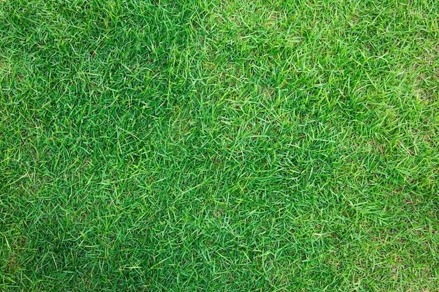 Close-up beeld van verse lente groen gras