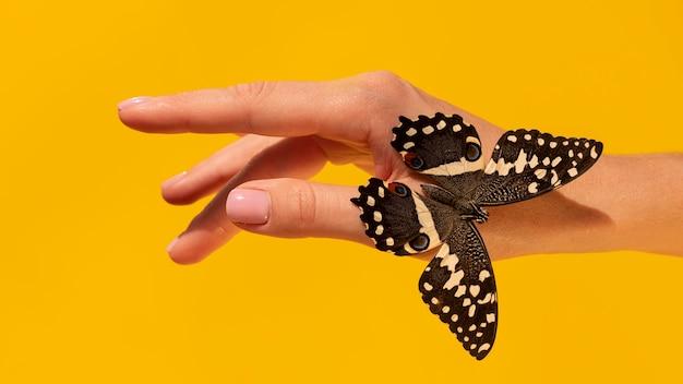 Close-up beeld van vlinder bij de hand