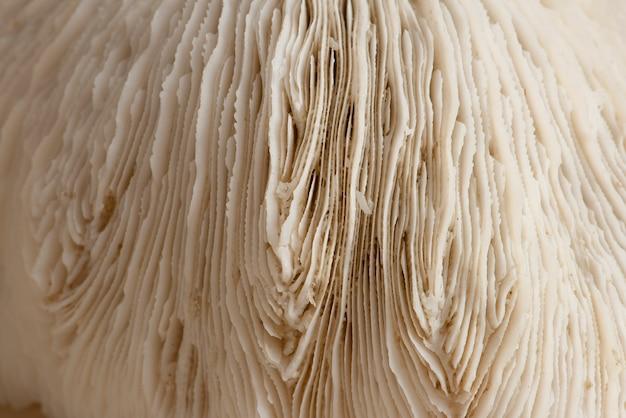 Close-up beige natuurlijke koraaltextuur