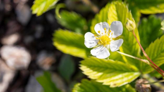 Close-up biologische planten buitenshuis