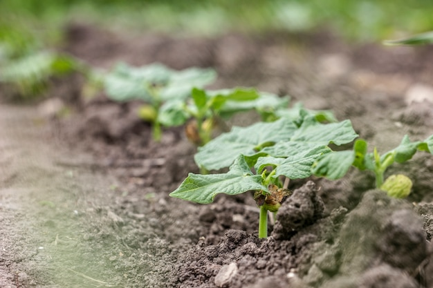 Close-up biologische tuinplanten