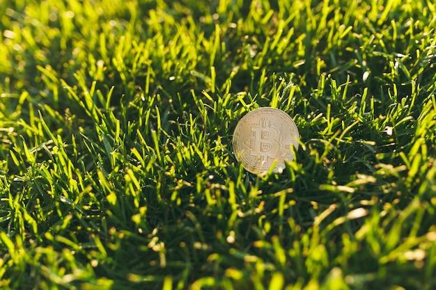 Close-up bitcoin, munt van gouden kleur op levendige lente groen vers gras, zonneschijn gazon. natuur textuur, groene achtergrond voor behang. zachte focus. veld, financieel ontwerp, virtueel valutaconcept.