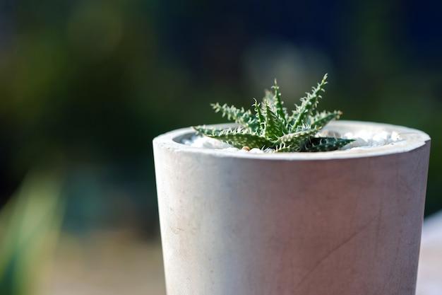Close up cactus in een kale cementpot ingericht in een café met een wazige natuurachtergrond.