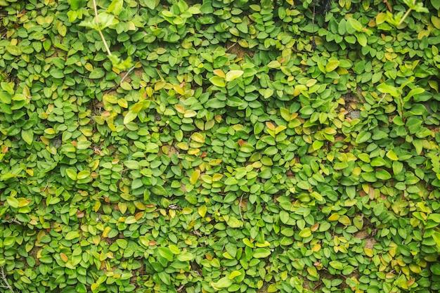 Close-up de groene plant op de muur voor gestructureerde achtergrond