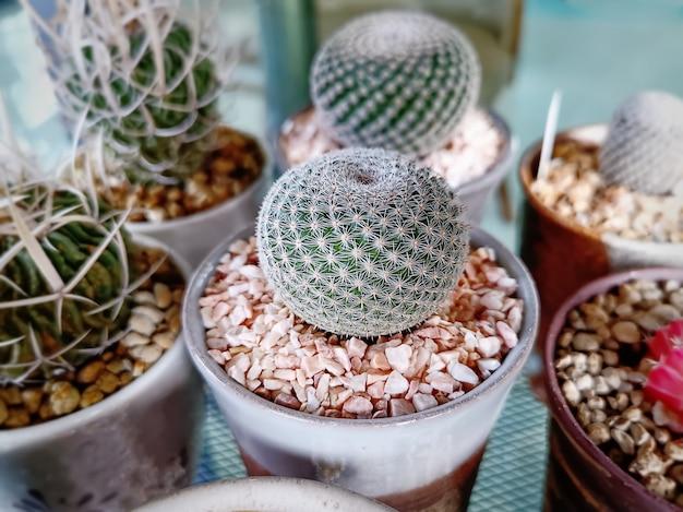 Close-up decoratieve ingemaakte sferische stekelige succulente installatie