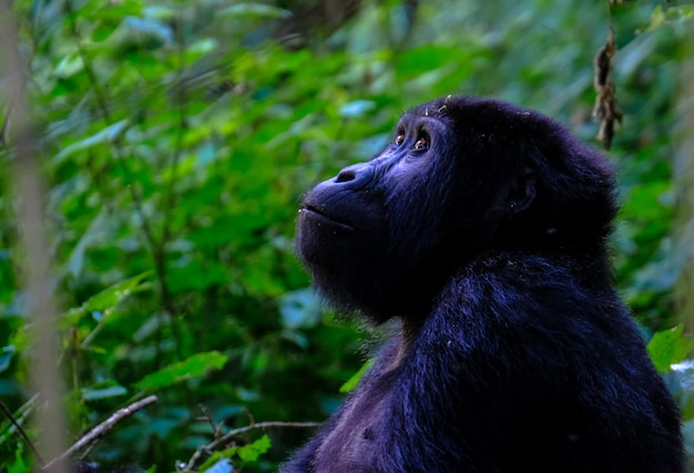 Close-up die van een aap is ontsproten die omhoog eruit ziet