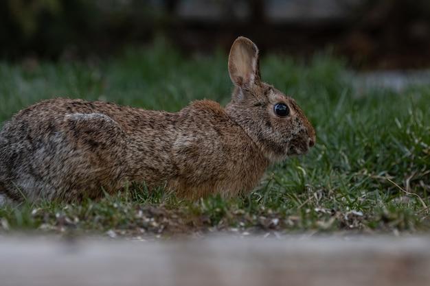 Close-up die van een bruin konijn op een grasgrond is ontsproten