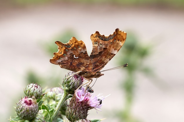 Close-up die van een bruine vlinder is ontsproten die zich bovenop een bloem bevindt