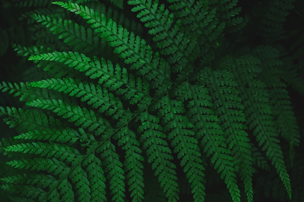 Close-up die van een groen geveerd blad is ontsproten.