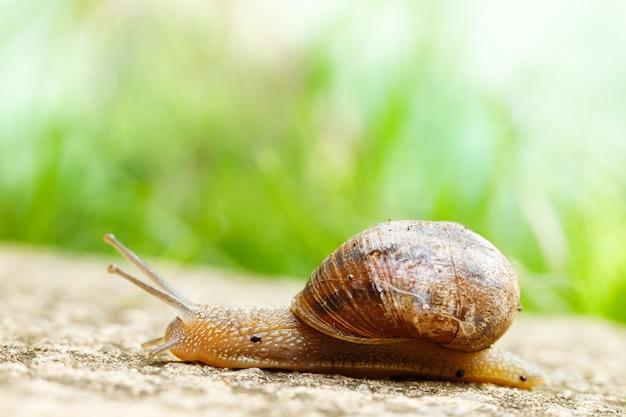 Close-up die van een grote slak is ontsproten die rond op de grond kruipt