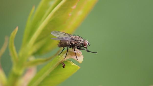 Close-up die van een insectvlieg is ontsproten die op het blad met een vage ruimte rust