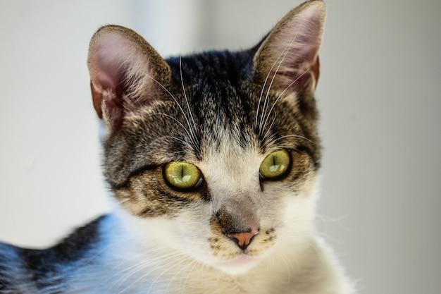 Close-up die van een kat is ontsproten die de camera met een vage achtergrond bekijkt