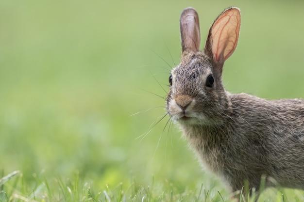 Close-up die van een leuk grijs konijntje is ontsproten