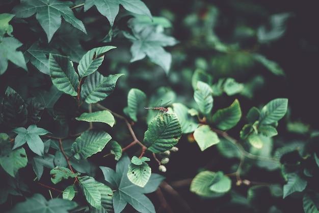 Close-up die van een libel op mooie groene bladeren in een bos is ontsproten