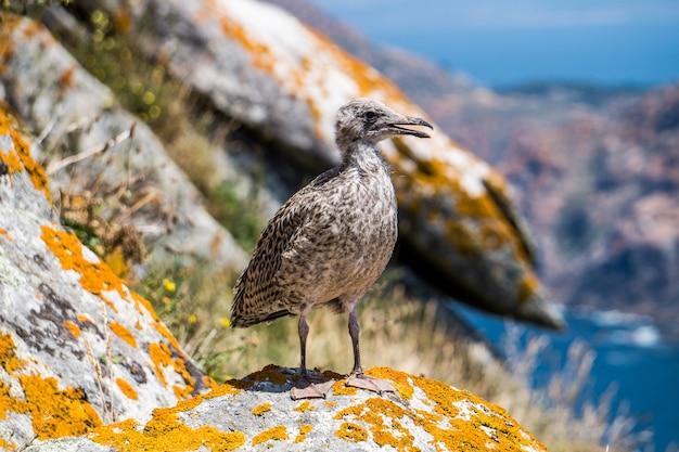 Close-up die van een mooie zeevogel is ontsproten die zich op rotsen bevindt