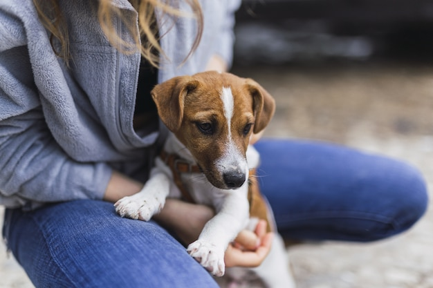 Close-up die van een persoon is ontsproten die een kleine jack russell terrier koestert in het zonlicht