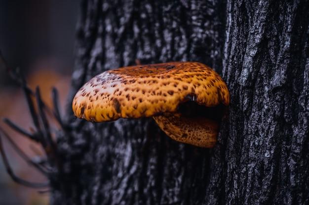 Close-up die van een pholiota-paddestoel is ontsproten die op een boom groeit