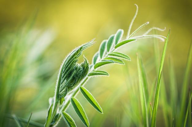 Close-up die van vers groen gras op vaag is ontsproten