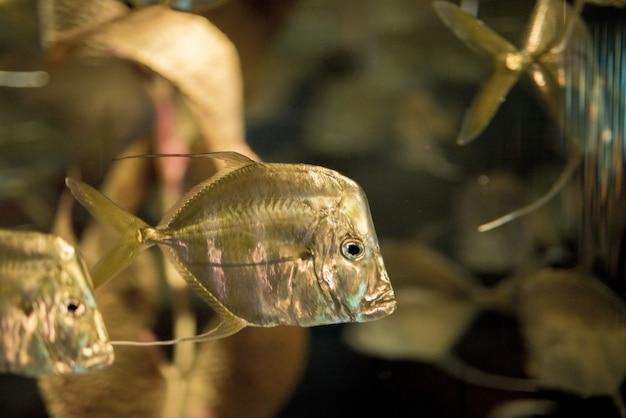 Close-up die van vissen is ontsproten onderwater