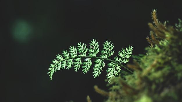 Close-up diverse installaties in regenwoud