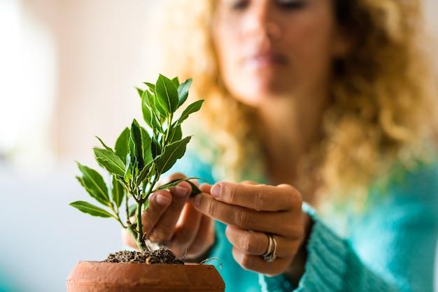 Close-up en portret van een vrouw die voor een kleine plant in zijn huis zorgt - plant die opgroeit