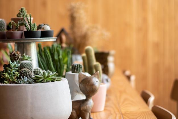Close-up foto's van veel cactus op de houten tafel in de kamer
