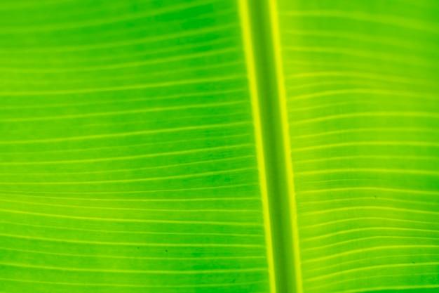 Close-up foto van bananenbladeren