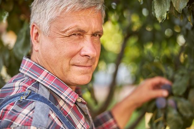 Close-up foto van een bejaarde die pruimen plukt van een boomtak terwijl hij naar de camera kijkt