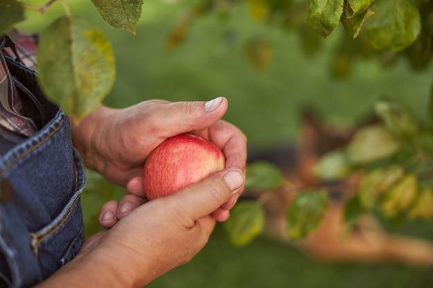 Close-up foto van een rode appel die wordt vastgehouden in handen van een tuinman
