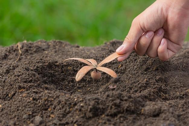 Close-up foto van hand met het planten van het jonge boompje van de plant
