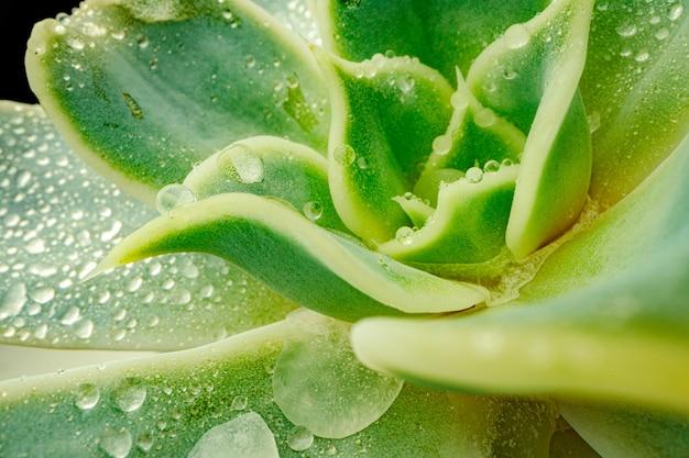Close-up foto van sappige bladeren met druppels water
