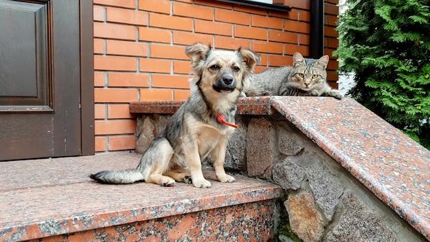 Close-up foto van schattige hond en kat liggend op de veranda bij groot huis
