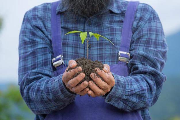 Close-up foto van tuinman hand met het jonge boompje van de plant