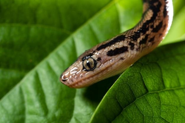 Close-up fotografie van een exotische slang op een boomtak.
