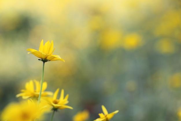 Close-up gele bloemen in het voorjaar
