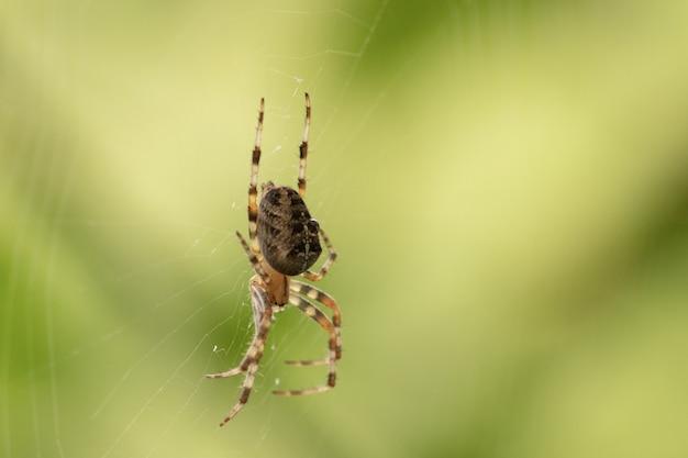 Close-up gericht schot van een spin op een spin