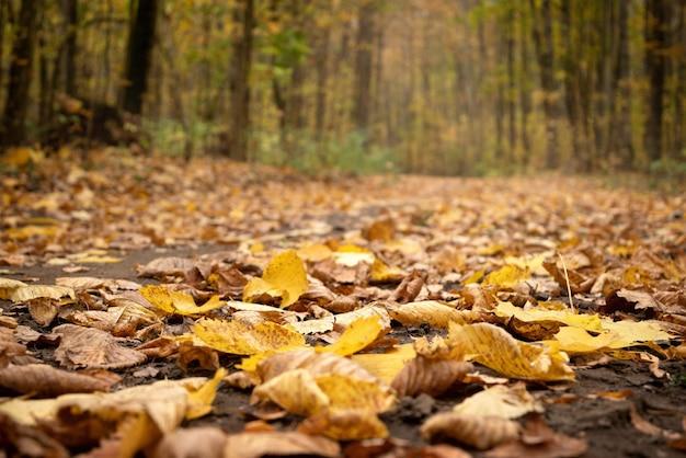 Close-up gevallen gele bladeren bedekken onverharde weg in het herfstbos